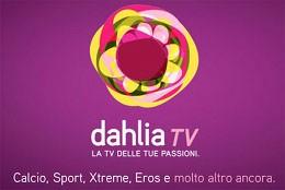 dahlia-tv