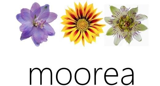 Microsoft Moorea 15