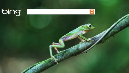Bing animazioni