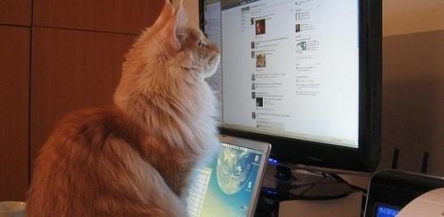 Facebook per animali