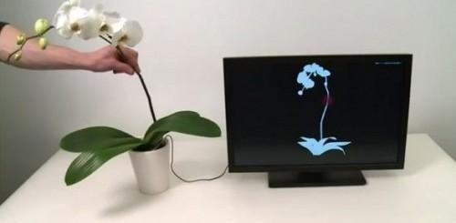 Disney Botanicus Interacticus