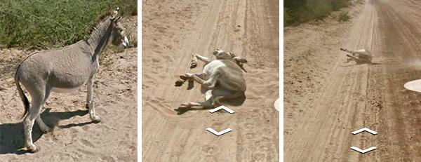 La sequenza: tre immagini ritraggono l'animale prima e dopo il passaggio della Google Car in Botswana