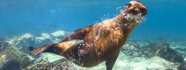 Le Galapagos su Street View