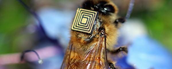 Il chip RFID applicato al dorso delle api non modifica il loro comportamento abituale