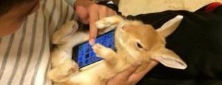 Coniglio come cover per smartphone