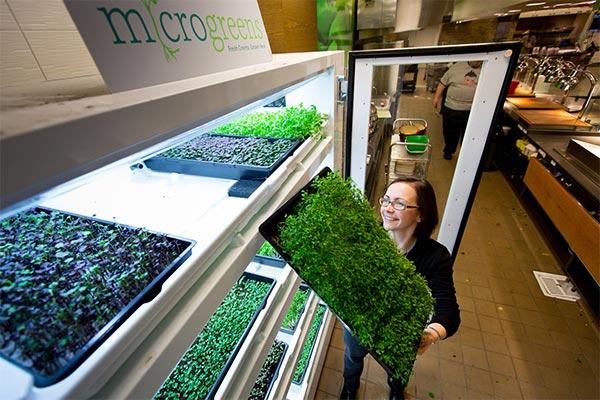 Parte delle verdure e delle insalate servite nel campus di Microsoft sono prodotte all'interno della struttura