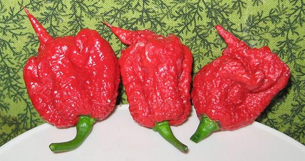 Carolina Reaper: il peperoncino più piccante del mondo (fino a 2.200.000 unità Scoville)