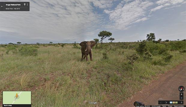 Un elefante a spasso per il Kruger National Park