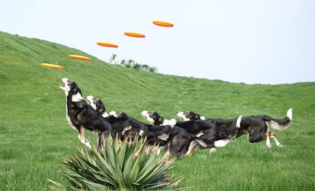 Un'immagine realizzata con la modalità Motion Shot Video della fotocamera