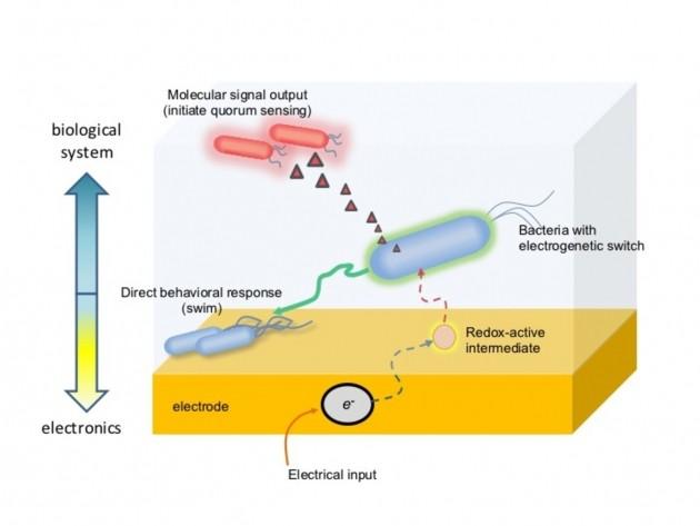 Switch elettrogenetico