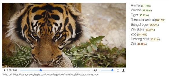 La nuova Google Cloud Video Intelligence API in azione