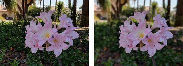Una fotografia macro scattata senza Modalità Ritratto (a sinistra) e con la modalità attiva (a destra)