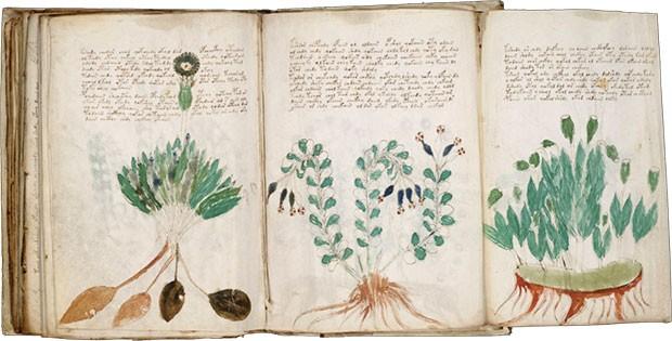 Il manoscritto Voynich, codice illustrato risalente al XV secolo