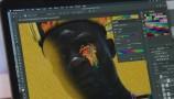 Adobe: l'IA che individua le immagini contraffatte
