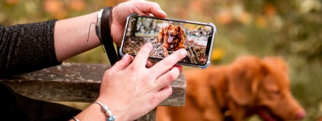 Cane e iPhone
