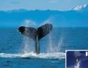 Balena in Antartide