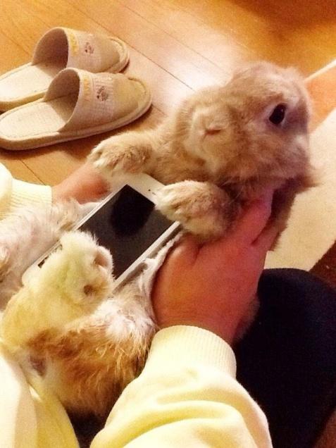 Conigli e gatti vivi come case per smartphone