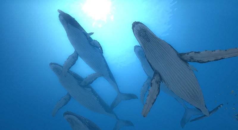 Endless Ocean 2: Adventures of the Deep - Nel blu!
